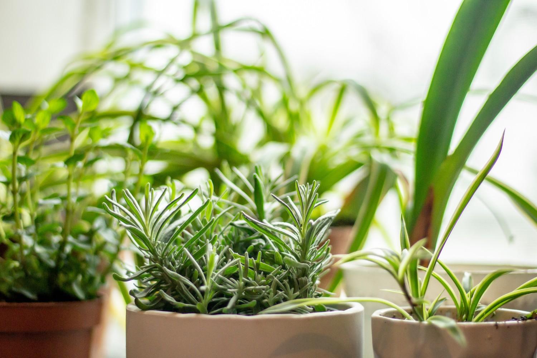 How to Start a Summer Herb Garden Indoors