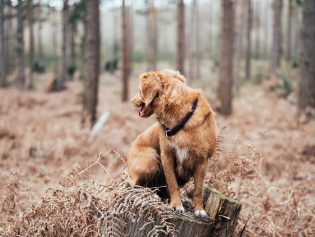 Winthrop's Canine Residents Can Roam and Romp at Lake Roland